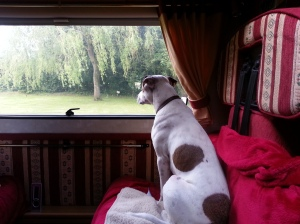 Kips enjoying the view at the Anvil Inn campsite