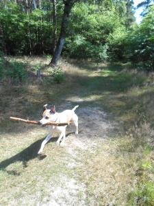 A 3 day stick