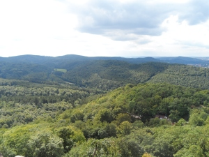 It's easy to believe almost a third of Germany's land is covered with forest